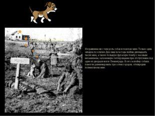 Несравнима ни с чем роль собак в поисках мин. Только одна овчарка по кличке
