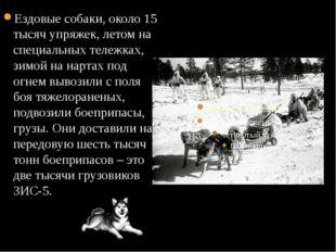 Ездовые собаки, около 15 тысяч упряжек, летом на специальных тележках, зимой