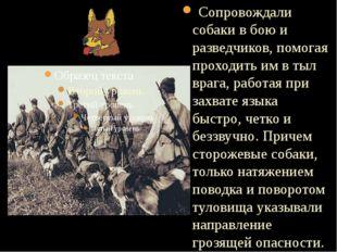 Сопровождали собаки в бою и разведчиков, помогая проходить им в тыл врага, р