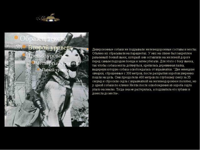 Диверсионные собаки же подрывали железнодорожные составы и мосты. Обычно их...