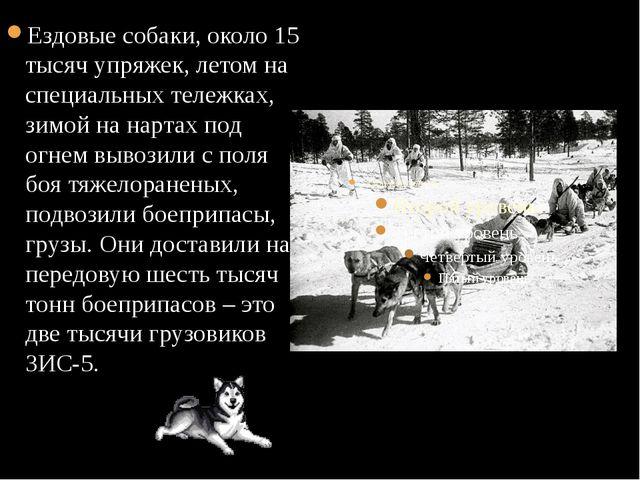 Ездовые собаки, около 15 тысяч упряжек, летом на специальных тележках, зимой...