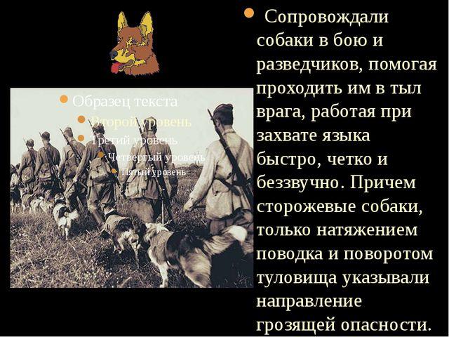 Сопровождали собаки в бою и разведчиков, помогая проходить им в тыл врага, р...