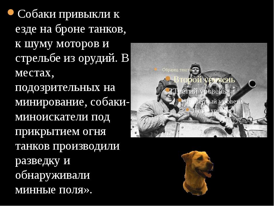 Собаки привыкли к езде на броне танков, к шуму моторов и стрельбе из орудий....