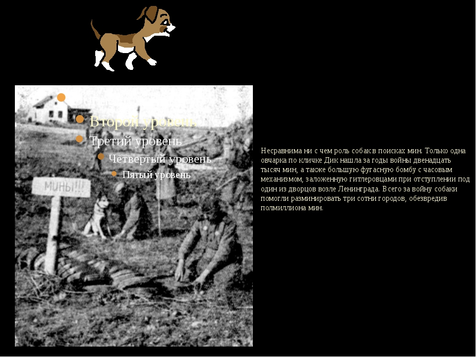 Несравнима ни с чем роль собак в поисках мин. Только одна овчарка по кличке...
