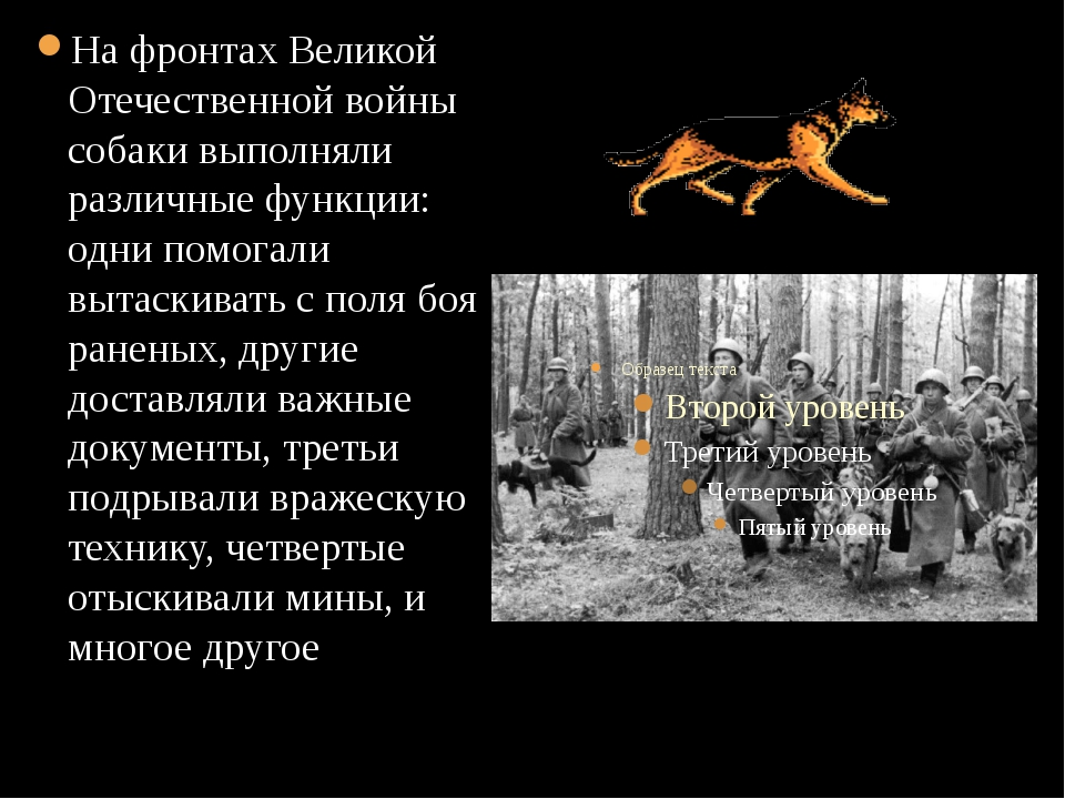 На фронтах Великой Отечественной войны собаки выполняли различные функции: о...