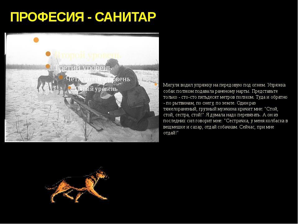 ПРОФЕСИЯ - САНИТАР Мигуля водил упряжку на передовую под огнем. Упряжка собак...