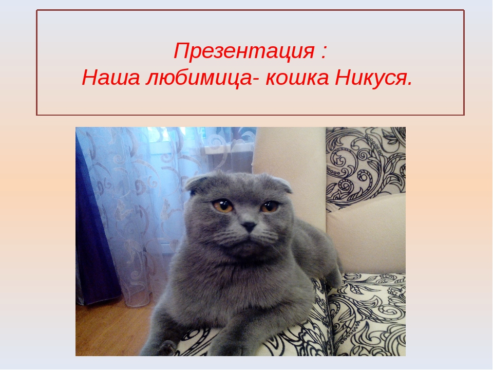 Презентация : Наша любимица- кошка Никуся.
