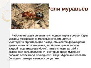 Роли муравьёв Рабочие муравьи делятся по специализации в семье. Одни муравьи