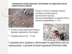 Определение вида муравьёв, обитающих на территории лесов Шарыповского района.