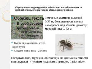 Определение вида муравьёв, обитающих на заброшенных и необработанных территор