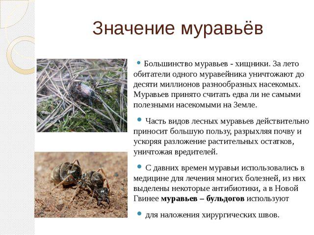 Значение муравьёв Большинство муравьев - хищники. За лето обитатели одного му...