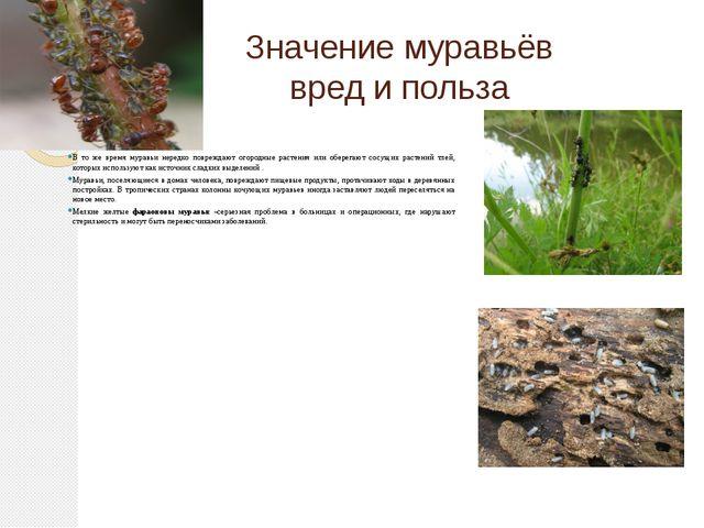 Значение муравьёв вред и польза В то же время муравьи нередко повреждают огор...
