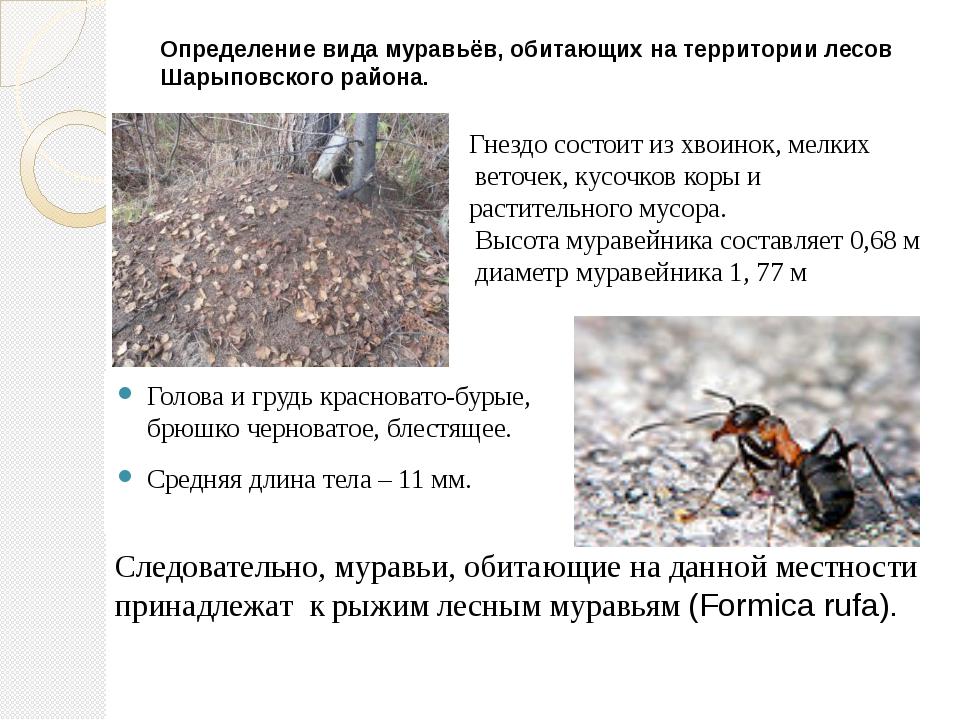 Определение вида муравьёв, обитающих на территории лесов Шарыповского района....