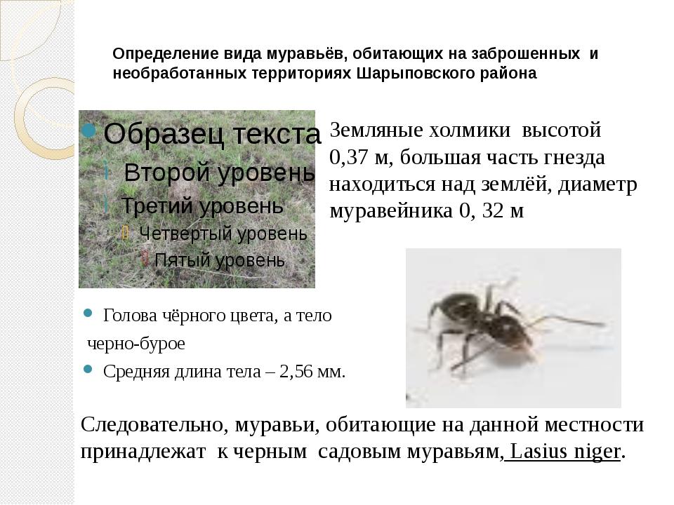 Определение вида муравьёв, обитающих на заброшенных и необработанных территор...