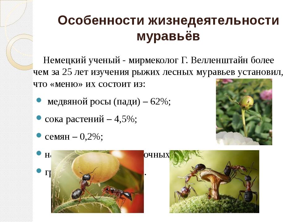 Особенности жизнедеятельности муравьёв Немецкий ученый - мирмеколог Г. Веллен...