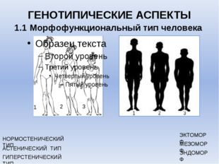 ГЕНОТИПИЧЕСКИЕ АСПЕКТЫ 1.1 Морфофункциональный тип человека МЕЗОМОРФ ЭКТОМОРФ