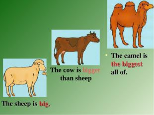 The sheep is big. The camel is the biggest all of. The cow is bigger than sh