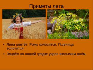 Приметы лета Липа цветёт. Рожь колосится. Пшеница золотится. Зацвёл на нашей