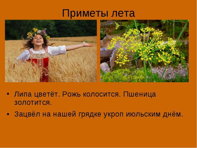 Приметы лета Липа цветёт. Рожь колосится. Пшеница золотится. Зацвёл на нашей...