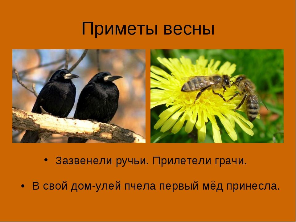 Приметы весны Зазвенели ручьи. Прилетели грачи. В свой дом-улей пчела первый...