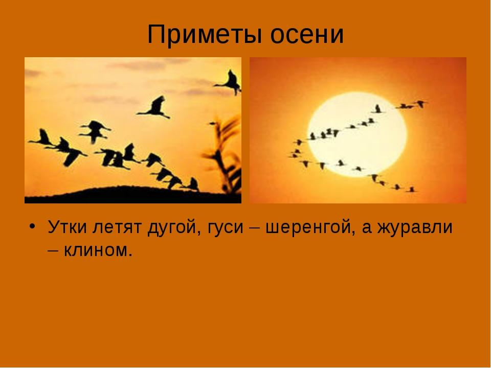 Приметы осени Утки летят дугой, гуси – шеренгой, а журавли – клином.