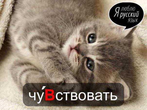 http://cs543109.vk.me/v543109229/6d01/LUrgM11WReo.jpg