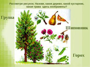 Рассмотри рисунок. Назови, какое дерево, какой кустарник, какая трава здесь и