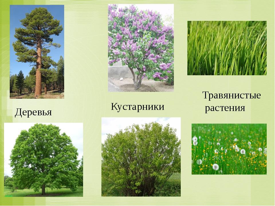 приготовления картинки групп растений деревья кустарники и травы один ведущих трендов