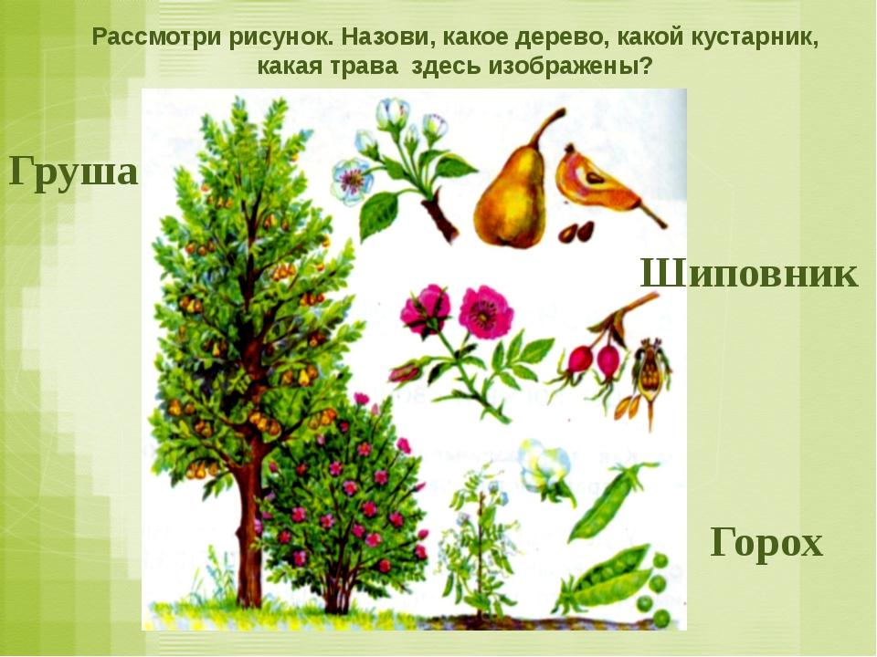 Рассмотри рисунок. Назови, какое дерево, какой кустарник, какая трава здесь и...