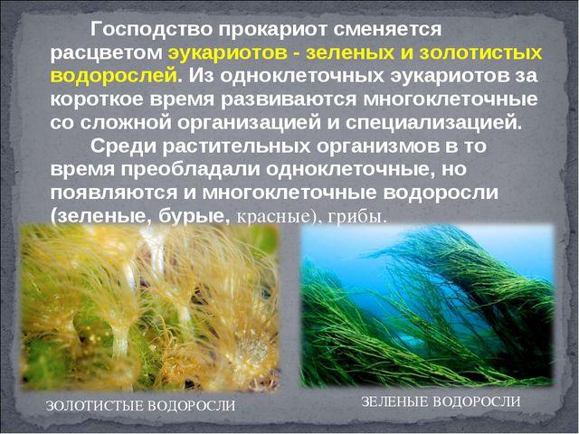 Господство прокариот сменяется расцветом эукариотов - зеленых и золотистых...