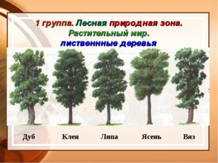 1 группа. Лесная природная зона. Растительный мир. лиственнные деревья Дуб Кл