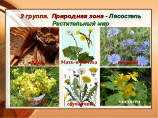 2 группа. Природная зона - Лесостепь Растительный мир злаки Мать-и-мачеха цик