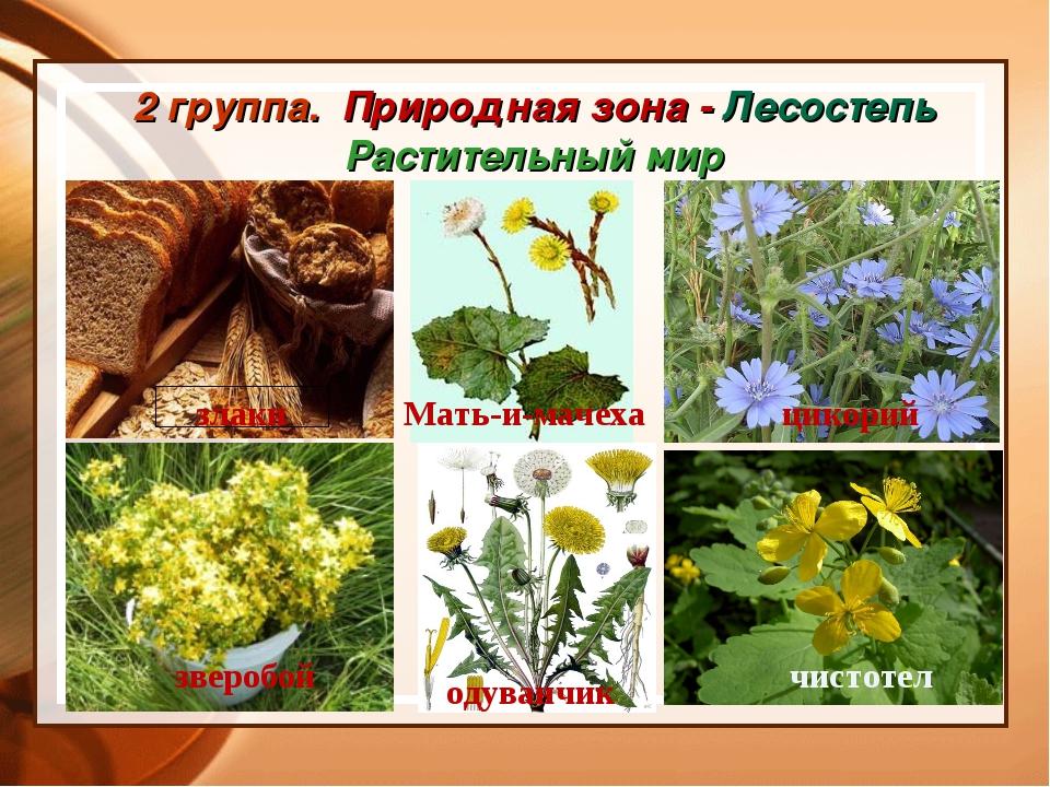 2 группа. Природная зона - Лесостепь Растительный мир злаки Мать-и-мачеха цик...