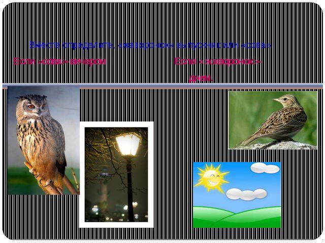 Вместе определите, «жаворонок» выпускник или «сова» Если «сова»-вечером Если...