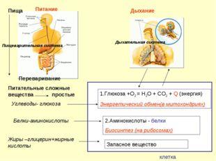 Белки-аминокислоты Жиры –глицерин+жирные кислоты Углеводы- глюкоза 2.Аминоки