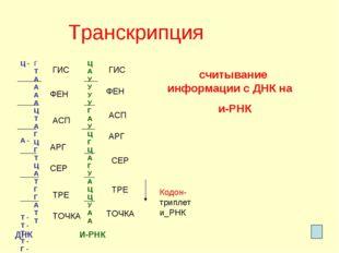 Транскрипция Ц - А - Т - Т - Т - Т - Г - А - Т - Ц - Г - Ц - А - Г - Т - А -