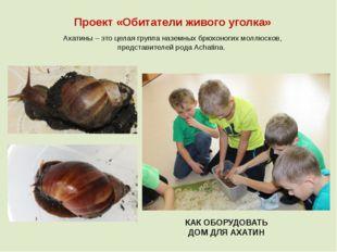 Проект «Обитатели живого уголка» Ахатины – это целая группа наземных брюхоног