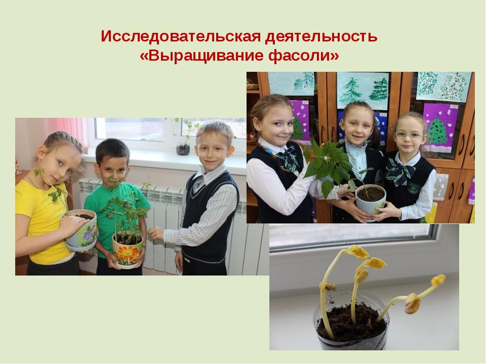 Исследовательская деятельность «Выращивание фасоли»