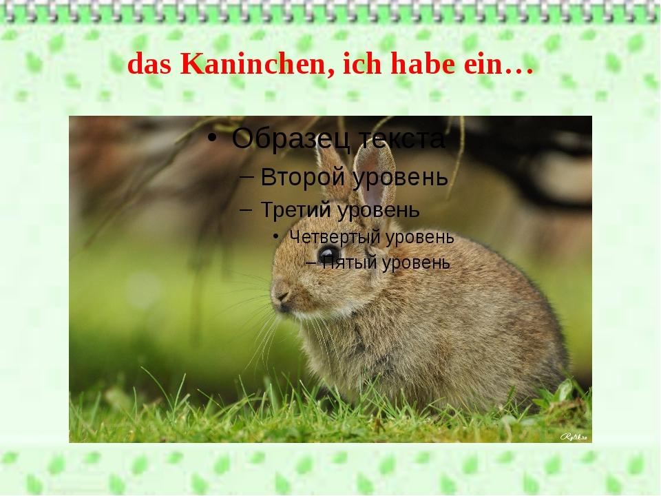 das Kaninchen, ich habe ein…