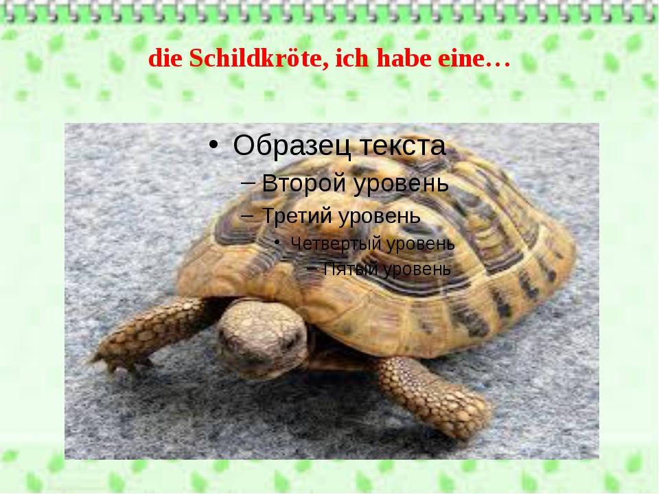die Schildkröte, ich habe eine…
