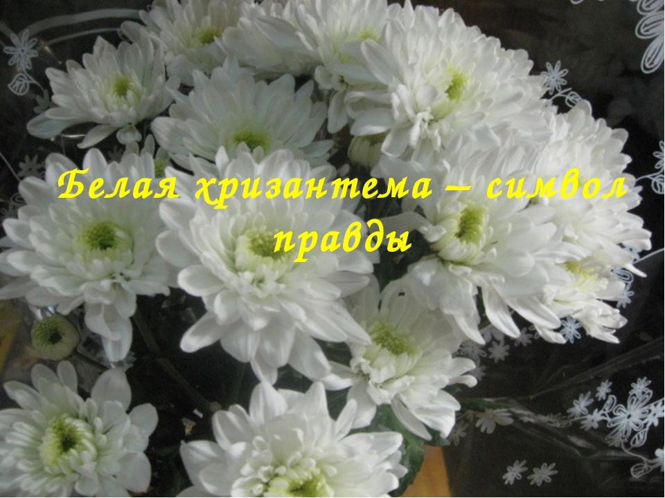 Белая хризантема – символ правды