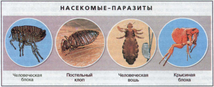http://blgy.ru/images/biology7t/pic40.png