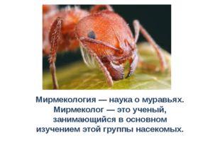 Мирмекология — наука о муравьях. Мирмеколог — это ученый, занимающийся в осно