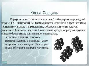 Палочки По способности образовывать споры палочки делятся на 3 группы: Пало