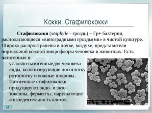 Палочки. Бактерии Бактерии (Bacterium)— микрооганизмы, которые не способны