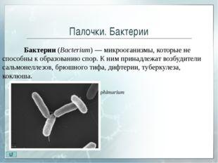 Извитые бактерии Извитые бактерии (Spirillaceae) – имеют характерную изогну