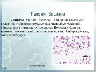 Извитые бактерии. Вибрионы Вибрионы(vibrare - колебаться, дрожать) - бакте