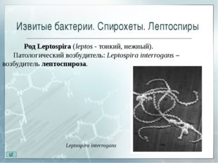 Источники информации 1) Воробьёв, А.А. Основы микробиологии, вирусологии и