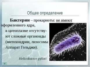 Кокки Кокки (греч. kokkos — зерно, лат. coccus — ягода) – шаровидные бактер