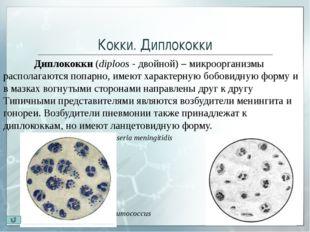 Кокки. Сарцины Сарцины (лат. sarcio — связываю) – бактерии шаровидной формы